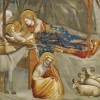 C - Nativity - giotto 2sm